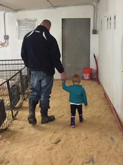 Walking in the pig barn with daddy.